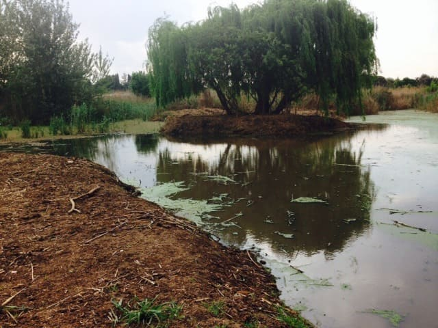 Near end result of Removing Algae from dams