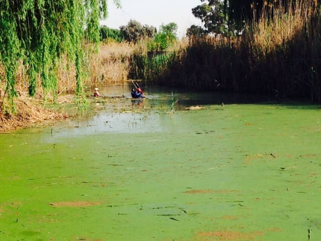 Process Removing Algae and Duckweed from dams