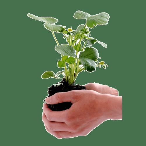 SOIL REMEDIATION A Microbe Rich, Natural and Organic Bio-Augmentation Process