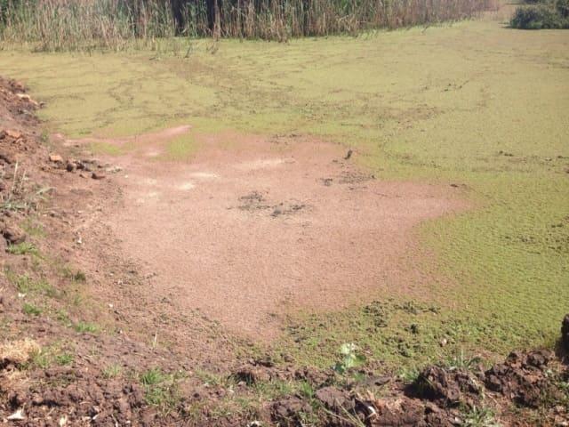 biotreat Removing Algae and Duckweed from dams