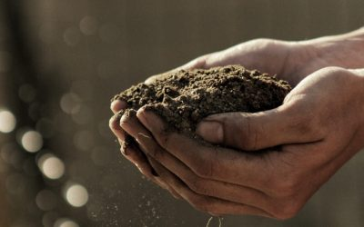 Soil remediation and the environment